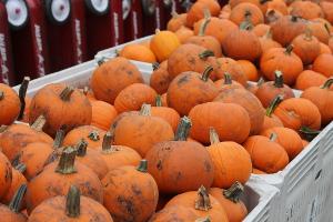 Baking Pumpkins