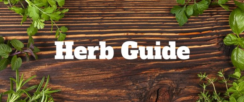 A Guide to the Herbs You Should Have in Your Pantry and How to Use Them